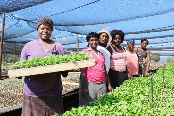 No land is too small for these small-scale farmers